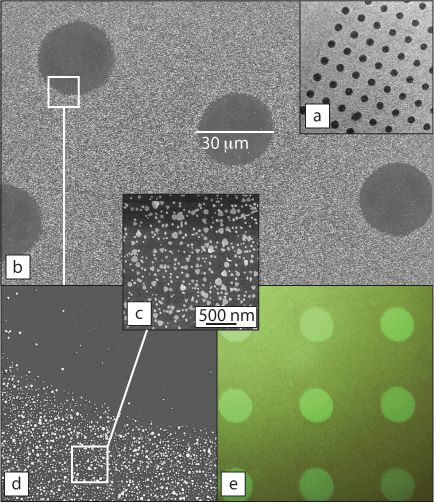 Gold nanoplates from the O'Toole group are attached to a silicon dioxide surface in a microscale pattern.